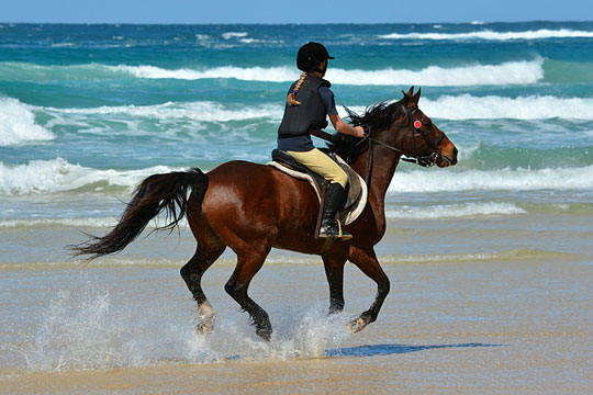 horseback riding on a sandy beach