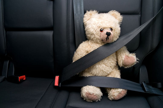 seat belt and teddy bear